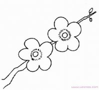 漂亮的梅花简笔画图片手绘素描