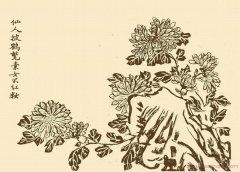 手绘野菊花的画法简笔画图片欣赏