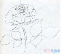 手绘玫瑰花怎么画 玫瑰花的画法图片素描