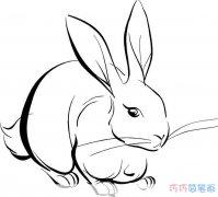 如何快速的画一只兔子_兔子简笔画图片