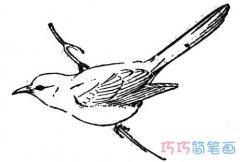 树枝上小鸟怎么画简单素描_小鸟简笔画图片