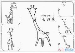 幼儿简单长颈鹿画法步骤图_长颈鹿简笔画图片