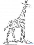 儿童漂亮的长颈鹿怎么画_长颈鹿简笔画图片