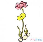 彩色简单漂亮莲花的画法步骤图_荷花简笔画图片