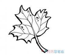 儿童卡通枫叶的画法简单好看_秋天简笔画图片