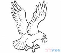 手绘老鹰的画法素描简单_怎么画老鹰简笔画图片