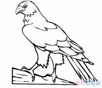 老鹰素描怎么画逼真好看 老鹰的画法简笔画图片