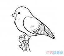 枝头小鸟素描怎么画清晰可爱 小鸟的画法简笔画图片