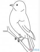 怎么画树枝上小鸟素描简单可爱_小鸟简笔画图片