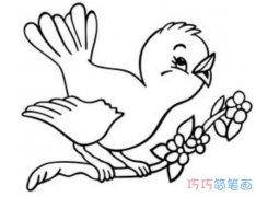 树枝上的小鸟简单画法素描_小鸟简笔画图片