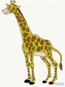 如何画长颈鹿素描简单易学_彩色长颈鹿简笔画图片