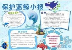 关于保护蓝鲸小报 蓝鲸手抄报图片模板简单漂亮