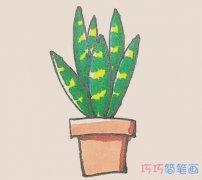 一步一步绘画彩色虎皮兰简笔画画法教程
