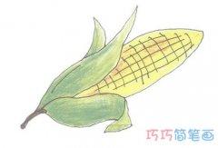 手绘玉米棒简笔画画法步骤教程涂颜色