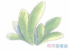 手绘一株小草简笔画画法步骤教程涂颜色