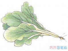 手绘简单青菜的画法详细步骤图带颜色
