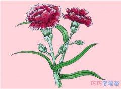 怎么绘画母亲节康乃馨简笔画步骤彩色简单漂亮