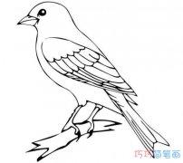 教你怎么画小鸟简笔画图片简单好看