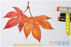 教你怎么画秋天枫叶简笔画步骤教程简单