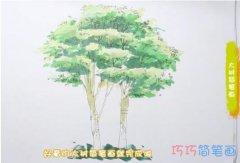 教你怎么画大树简笔画步骤教程涂颜色