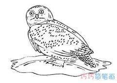 逼真猫头鹰简笔画的画法教程铅笔画