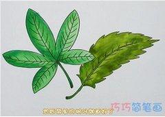 怎么手绘树叶简笔画步骤教程涂色简单