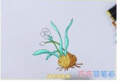 手绘水仙花简笔画怎么画涂色简单漂亮