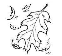 落叶树叶叶子简笔画怎么画简单好看