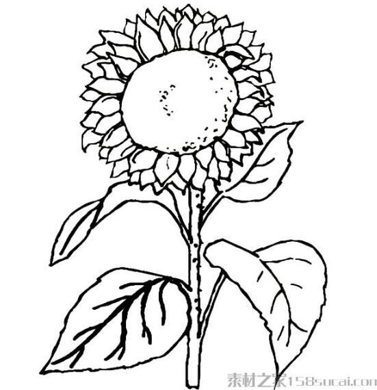 向日葵素描简笔画怎么画简单好看