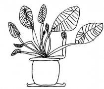 滴水观音盆栽简笔画怎么画简单好看
