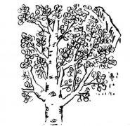 白杨树的画法步骤教程简单好看