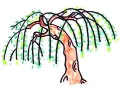 柳树柳枝简笔画怎么画简答好看步骤教程涂颜色
