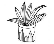 绿植盆栽虎皮兰简笔画怎么画步骤教程简单好看
