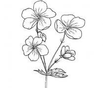 手绘鲜花简笔画的画法步骤教程 鲜花素描简笔画图片