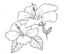 素描鲜花简笔画怎么画 手绘花卉简笔画画法步骤教程