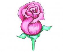 情人节母亲节大红色玫瑰花的简笔画画法步骤教程简单好看