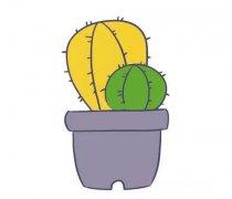 仙人球简笔画图片 仙人球盆栽的画法图解教程