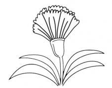 母亲节康乃馨怎么画简单又漂亮带步骤