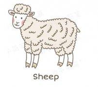 小绵羊的画法涂颜色 绵羊简笔画图片