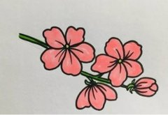 桃花的画法步骤涂颜色简单又漂亮