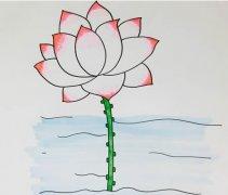 莲花荷花的画法步骤涂色简单又漂亮