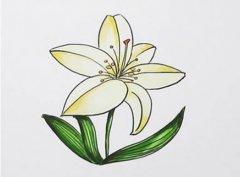 百合花的画法步骤涂色简单又漂亮