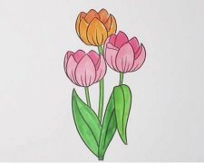 郁金香的画法步骤涂色简单又漂亮