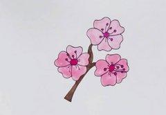 樱花的画法步骤图 樱花简笔画图片