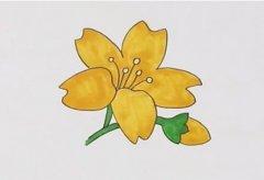 迎春花的画法步骤涂色 迎春花简笔画图片