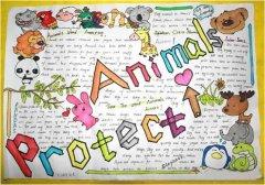 动物世界英语手抄报怎么画简单又漂亮